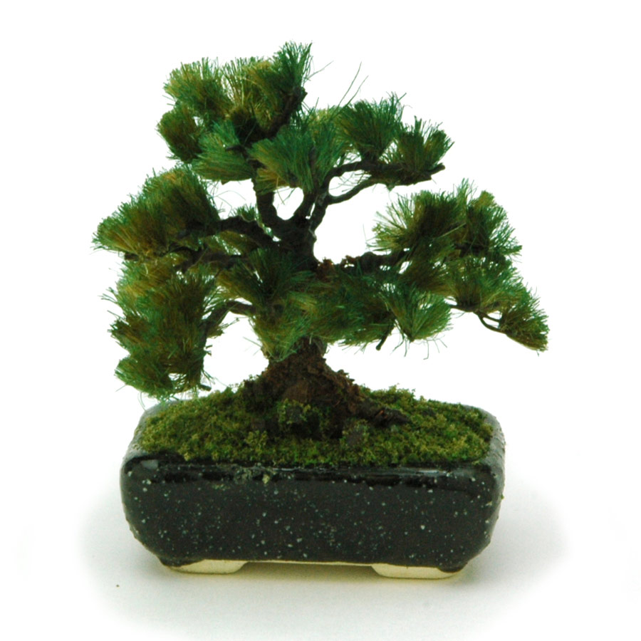 PLATZ 1/12 THE BONSAI Pine w/Square pod (Black)